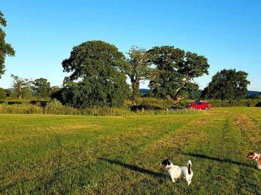 Manor Farm Campsite Tattenhall