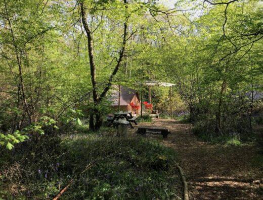 The Secret Campsite Wild Boar Wood
